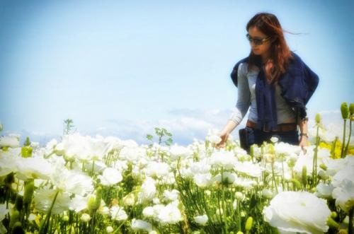 White Roses - Carlsbad 2012