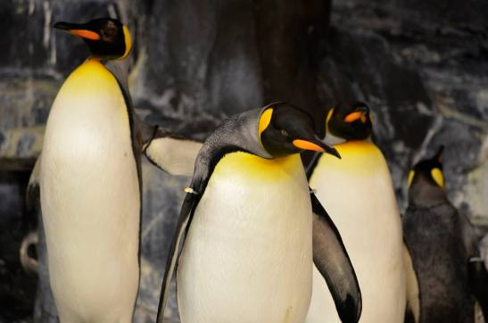Penguins @Seaworld Orlando